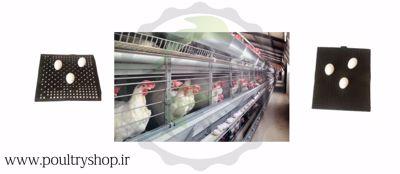 صورة للفئة 1 لانه تخم گذاری مرغ
